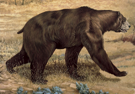 Giant Short Faced Bear